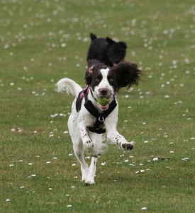 Daisy charging back with the ball!