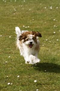 Suzie racing herself!