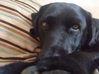 Sofa is mine...